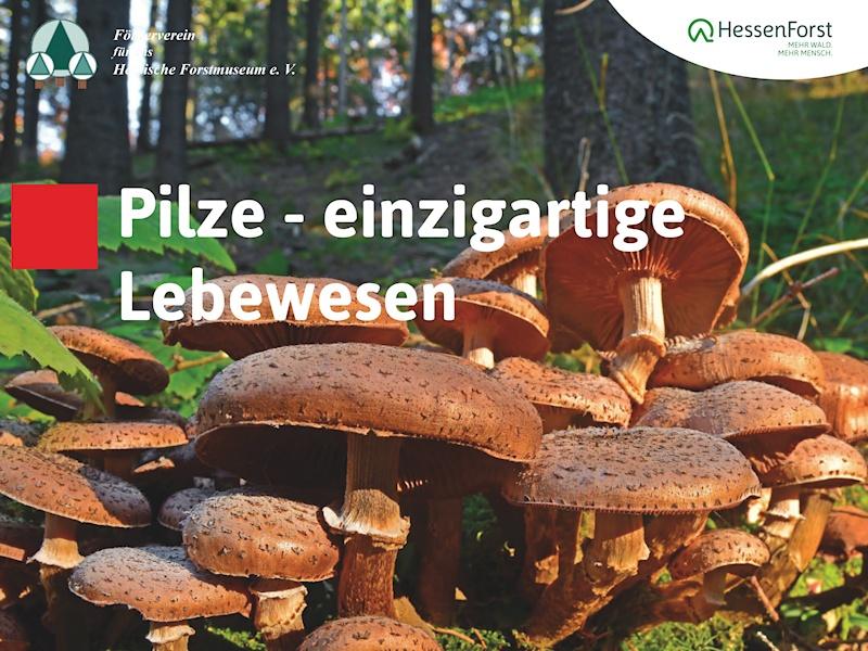 2018-12-20-Sonderausstellung-im-Hessischen-Forstmuseum.jpg