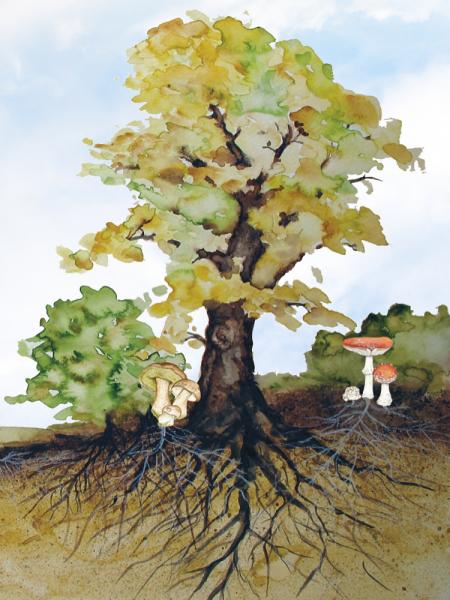 Mykorrhiza-Pilze machen Bäume robuster.